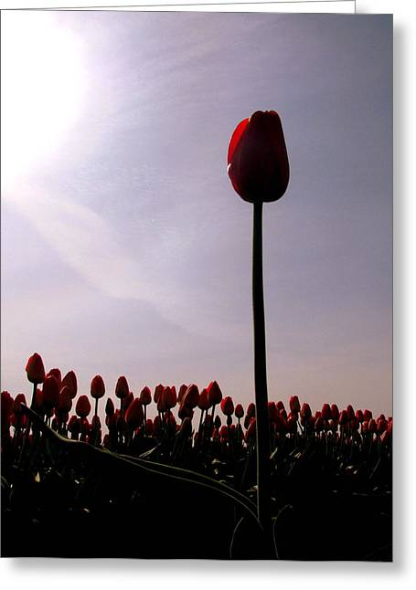 The Stand Out Greeting Card by Karla DeCamp