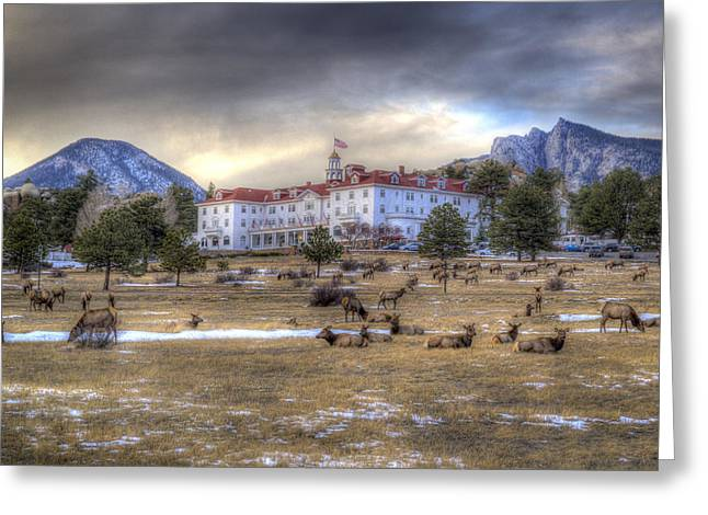 The Stanley With Elk Greeting Card