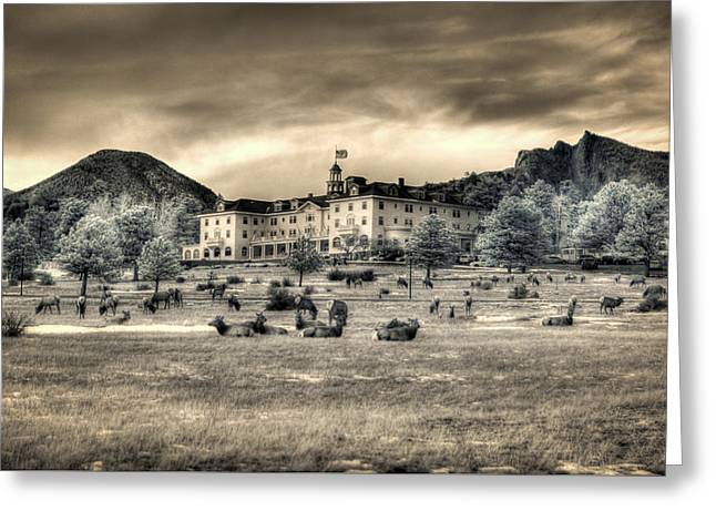 The Stanley With Elk Ir Greeting Card by G Wigler
