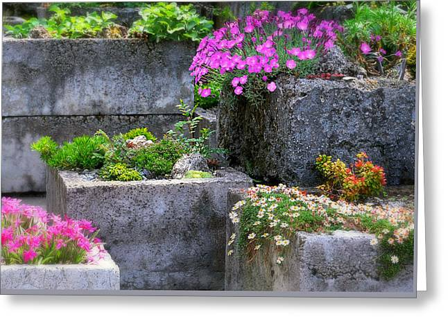 The Stone Planters Greeting Card by Diana Angstadt