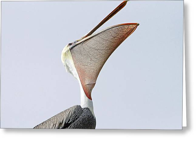 The Stretch  Greeting Card by Shoal Hollingsworth
