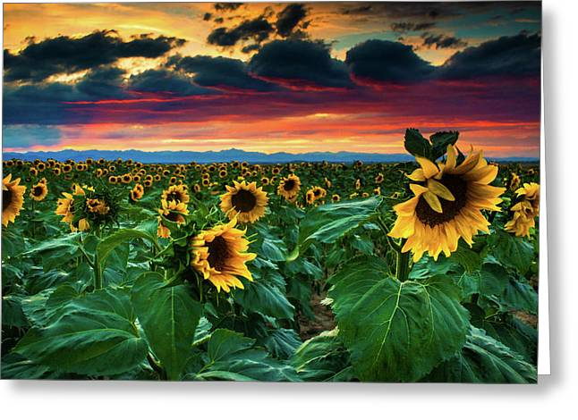 The Summer Winds Greeting Card