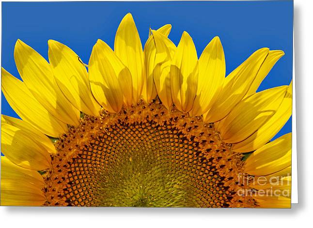 The Sun Also Rises Greeting Card by Wendy Mogul
