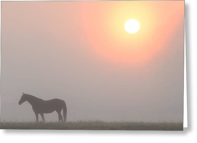The Sun Burning Through The Fog In Whitemarsh Greeting Card by Bill Cannon