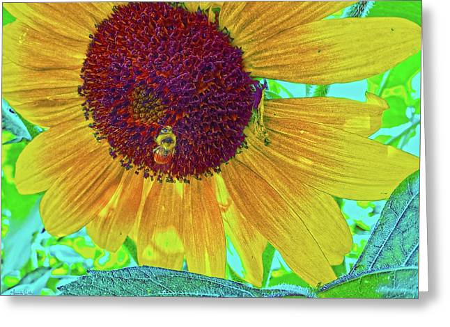 The Sunflower And The Bee Greeting Card by Amanda Smith