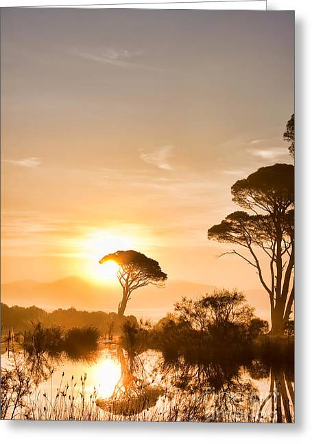 The Sunrise Greeting Card by Gabriela Insuratelu