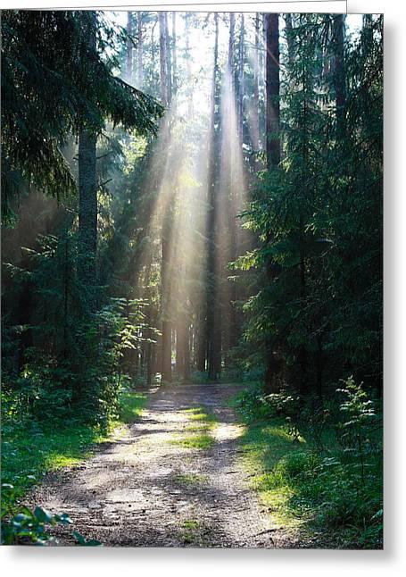 The Sun's Rays Make Their Way Through The Trees Greeting Card by Natalya Myachikova