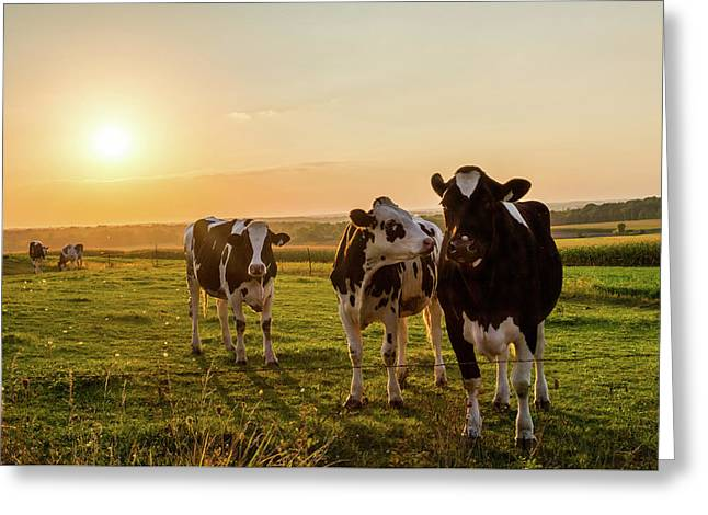 The Sunset Graze Greeting Card