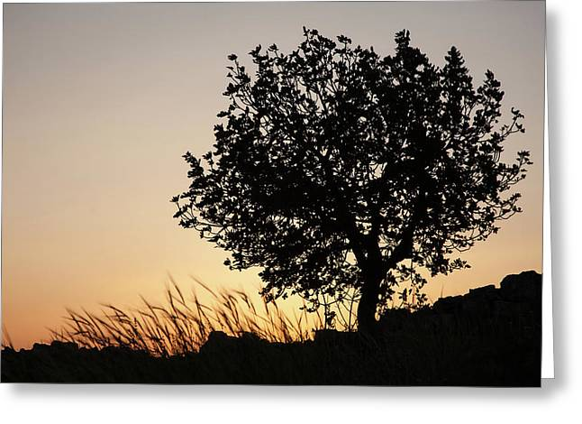 Sunset On The Hill Greeting Card