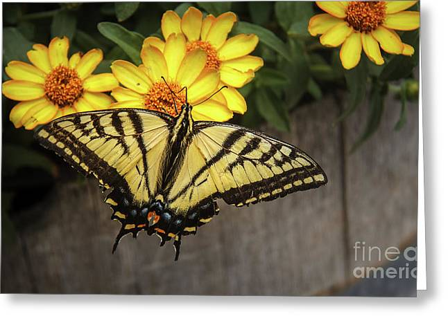 The Swallowtail Greeting Card by Robert Bales