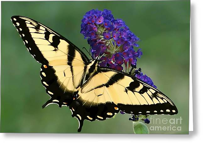 The Swallowtail Greeting Card