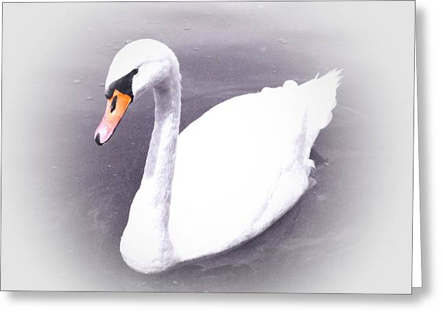 Schwarz Greeting Cards - The Swan 2 Greeting Card by Stefan Kuhn