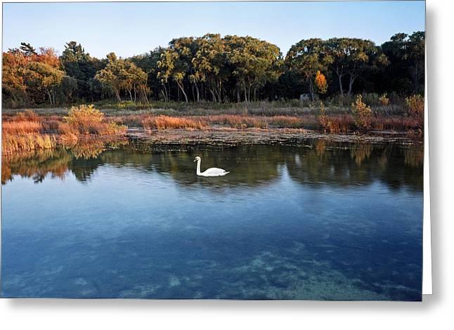The Swan Of Cross Village Marsh Greeting Card