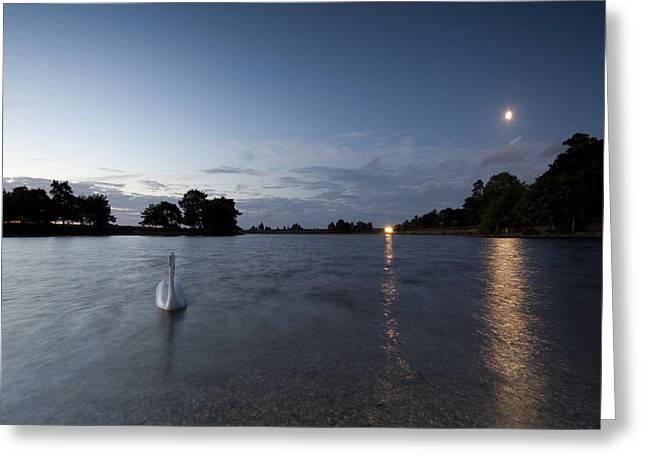 The Swan On The Lake Greeting Card by Angel  Tarantella