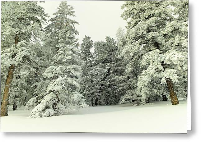 The Sweep Of Snow Greeting Card by Jeff Swan