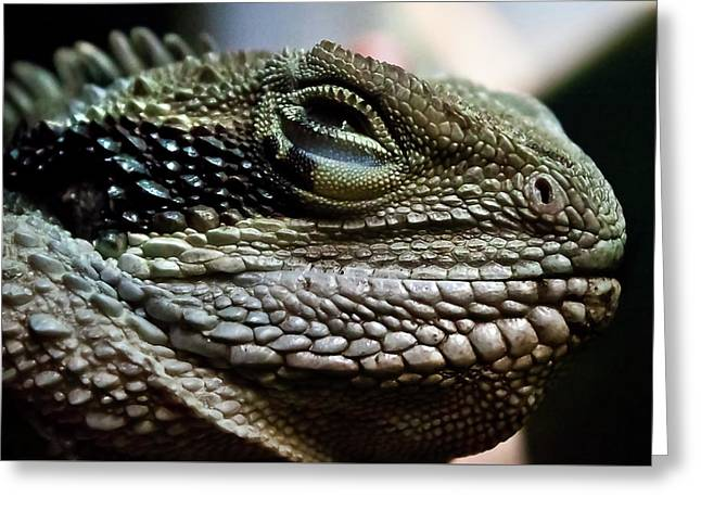 The Sweet Face Of A Dragon Greeting Card
