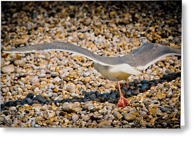 The Takeoff Greeting Card by Loriental Photography