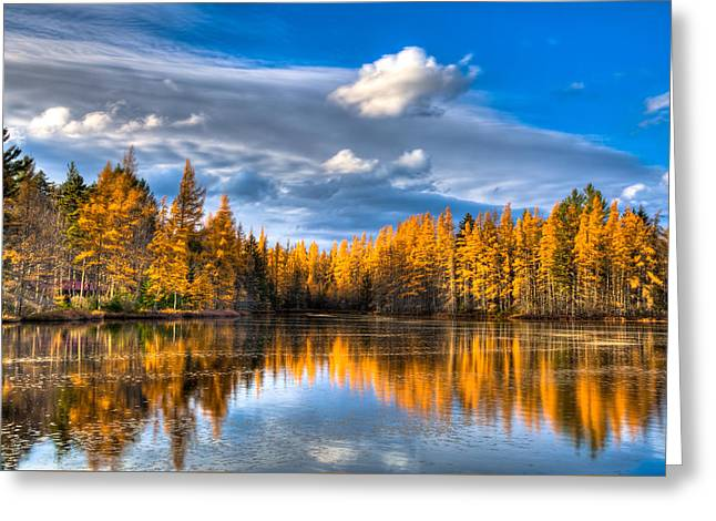 The Tamaracks At Woodcraft Camp Greeting Card by David Patterson
