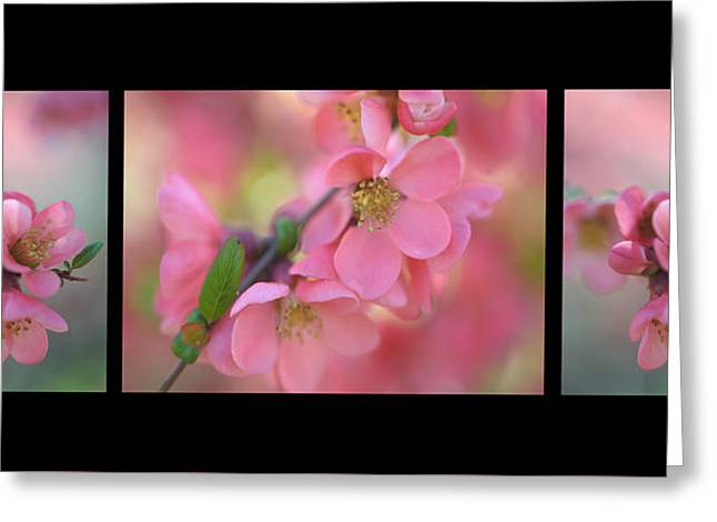 The Tender Spring Blooms. Triptych On Black Greeting Card by Jenny Rainbow