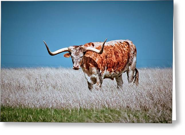 Greeting Card featuring the photograph The Texas Longhorn by Linda Unger