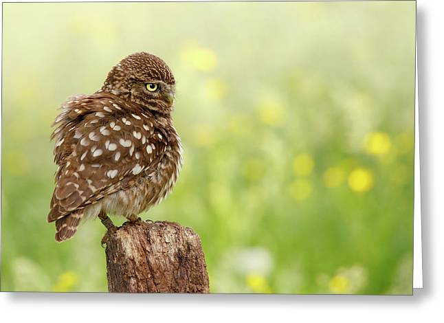 The Thinker -  Little Owl In A Flower Bed Greeting Card