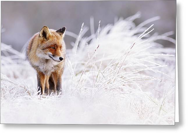 The Thinker - Red Fox In A Wintery Landscape Greeting Card by Roeselien Raimond