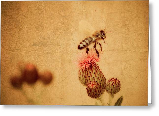 The Thistle And The Bee Greeting Card