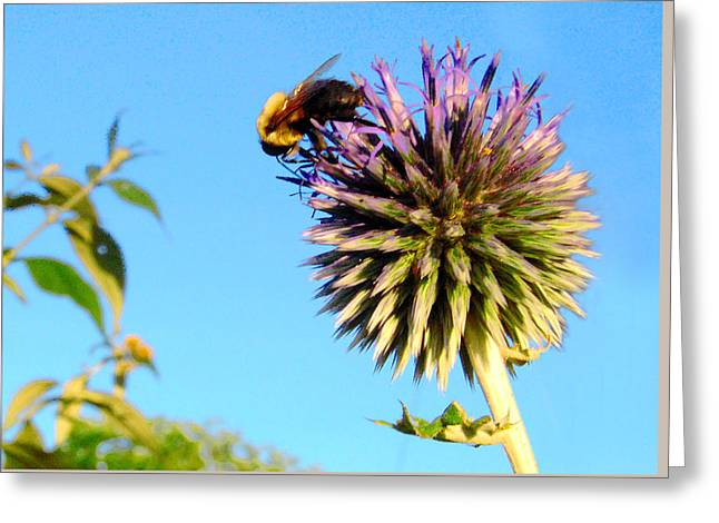 The Thistle And The Bee. Greeting Card