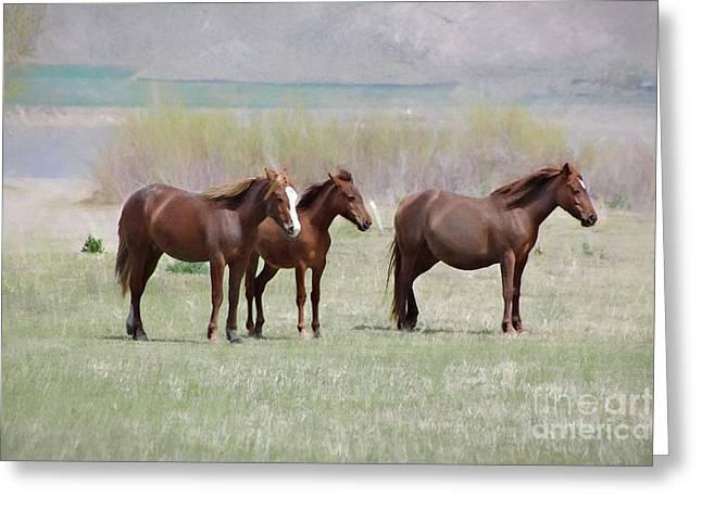 Greeting Card featuring the photograph The Three Amigos by Benanne Stiens
