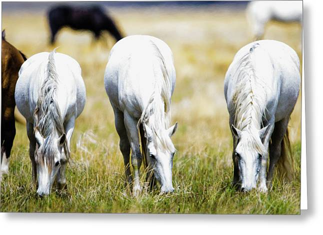The Three Amigos Grazing Greeting Card