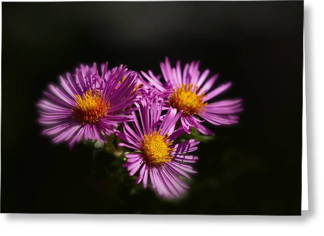 Greeting Card featuring the photograph The Three Daisies by Anthony Rego
