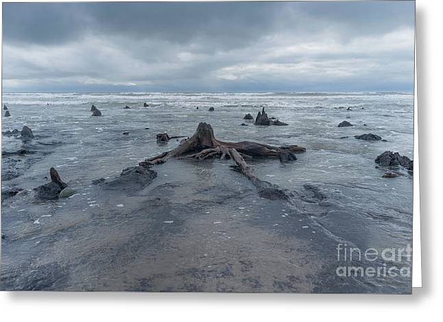 The Tide Comes In Over The Bronze Age Sunken Forest At Borth On The West Wales Coast Uk Greeting Card