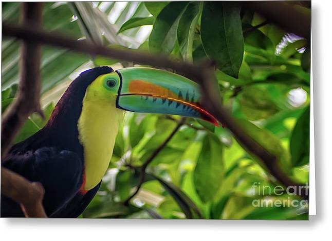 The Toucan Greeting Card
