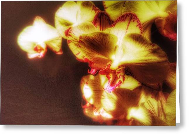 Greeting Card featuring the photograph The Touch by Isabella F Abbie Shores FRSA