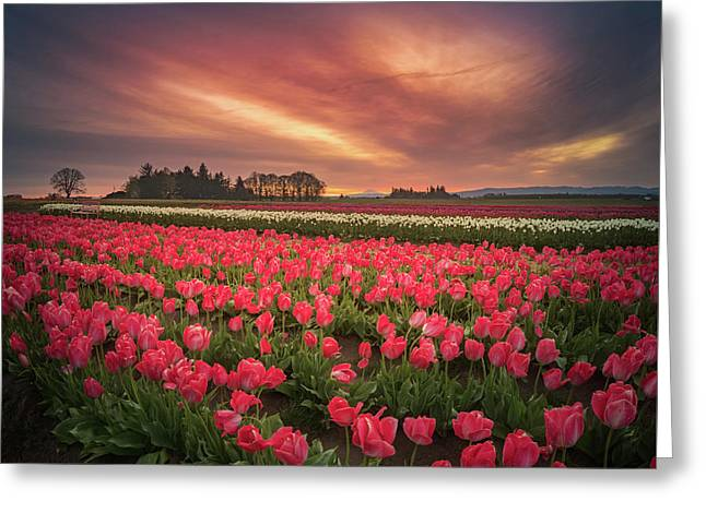 Greeting Card featuring the photograph The Tranquil Morning Before Sunrise by William Lee