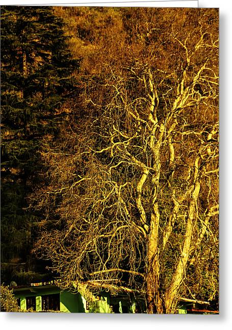 The Tree And The House Greeting Card by Rajiv Chopra
