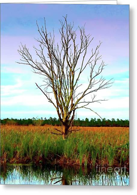 The Tree In The Marsh Greeting Card