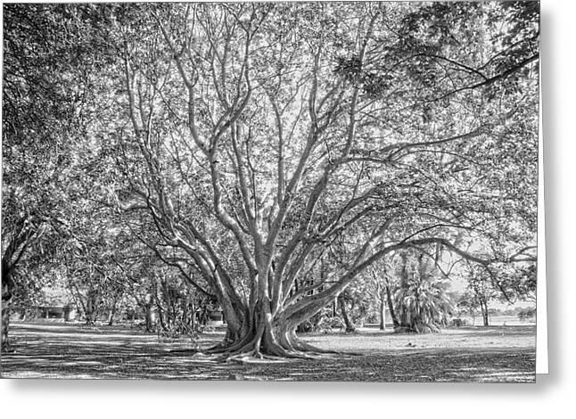 The Tree In The Middle Greeting Card by Taschja Hattingh