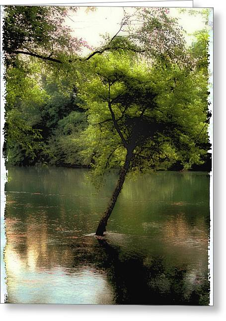 The Tree Island Greeting Card by Ken Gimmi