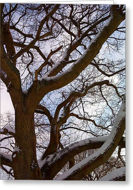 Greeting Card featuring the photograph The Tree Looked Up by Mira Cooke