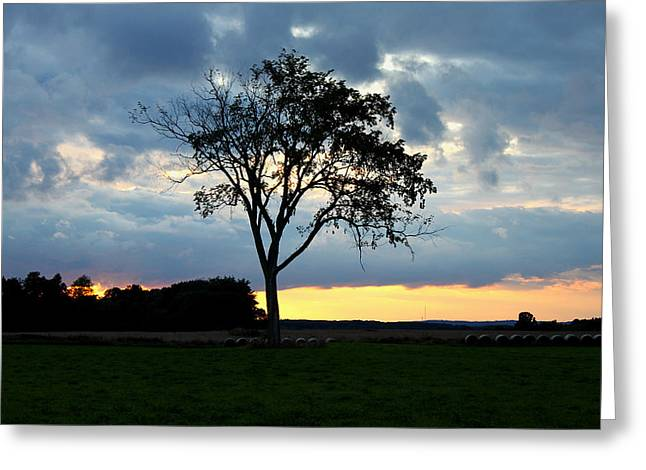 The Tree Of Life Greeting Card by Mark  France