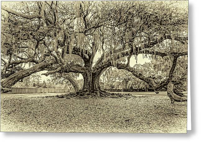 The Tree Of Life Sepia Greeting Card
