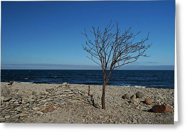 The Tree On Baltic See Beach Greeting Card by Irene Vital