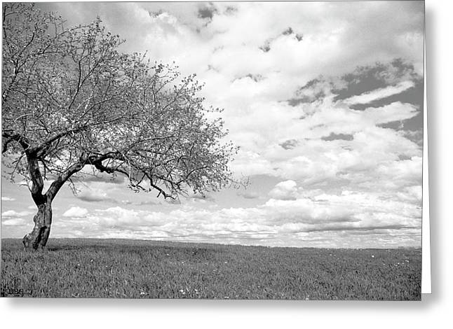 The Tree On The Hill Greeting Card