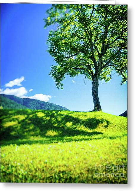 Greeting Card featuring the photograph The Tree On The Hill by Silvia Ganora