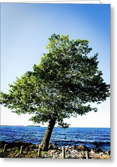 Greeting Card featuring the photograph The Tree by Onyonet  Photo Studios