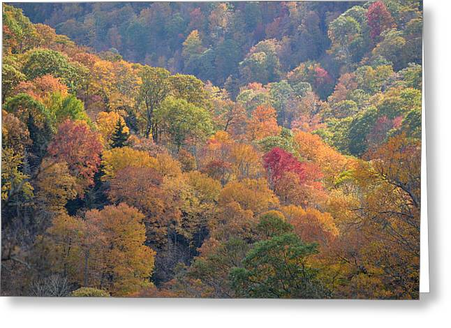 The Trees Of Autumn On The Blue Ridge Greeting Card