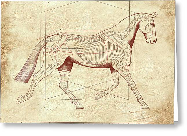 The Trot - The Horse's Trot Revealed Greeting Card by Catherine Twomey