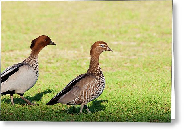 The Two Of Us Greeting Card by Heather Thorning