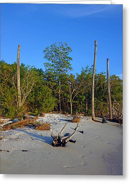 The Unspoiled Beauty Of Barefoot Beach In Naples - Portrait Greeting Card